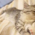 子供が夜に寝ない11個の原因!パパがやるべきこと