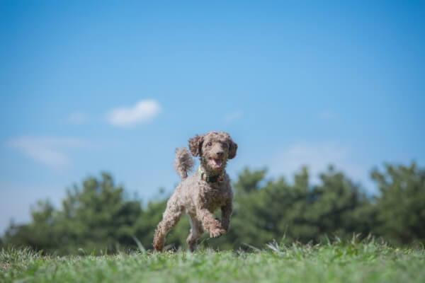 初回完全無料お試しアリ|犬のがん・腫瘍にオススメのドックフード「犬心」