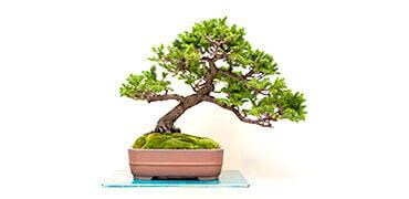 【動画】プロからお手頃価格で学べる盆栽講座!「モダン盆栽」の作り方など紹介!Shummy