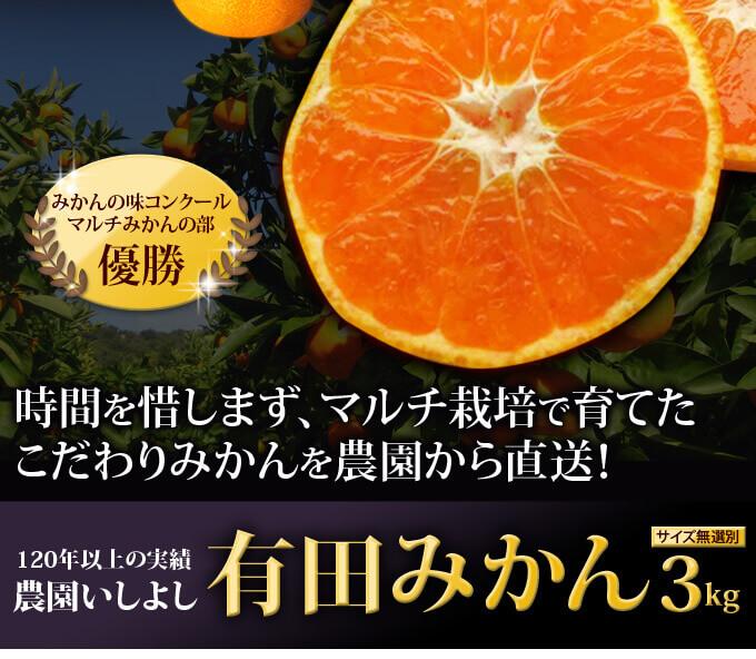 【楽天】美味しい有田みかん紹介!